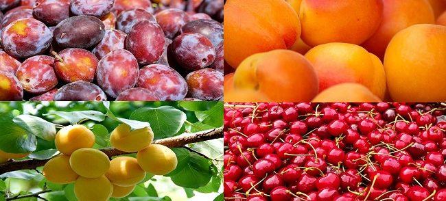 frutas-650x294