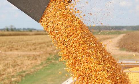 milho-export-jul-19-3